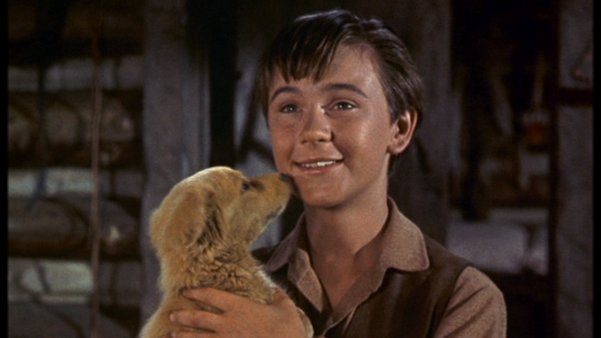 old yeller Home video, dvd, and blu-ray releases of old yeller contents[show] vhs ced laserdisc dvd blu-ray cover released notes october 15, 1981 november 1, 1991 part of the.