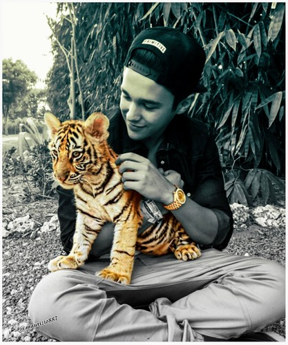 Austin Mahone wallpaper with a tiger cub entitled austin mahone, 2015