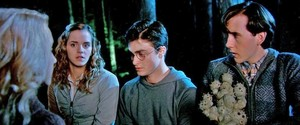 harry nevile and hermione