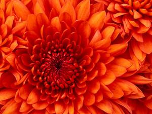 my फूल