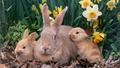 Bunnies - bunny-rabbits wallpaper