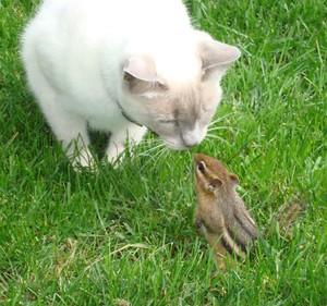 Cat meets esquilo
