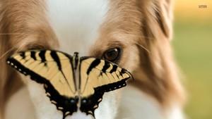 Dog and vlinder
