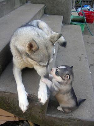 कुत्ता