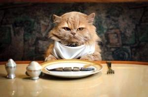 Feed me, human