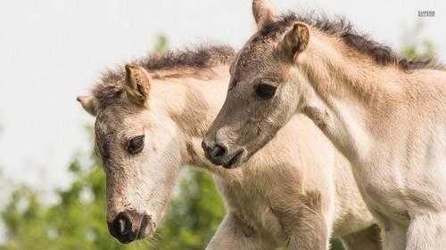 farasi karatasi la kupamba ukuta called Horse