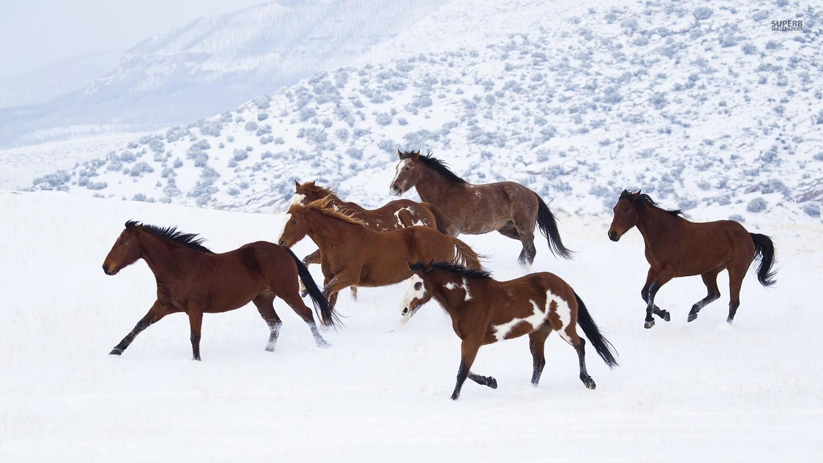 壁纸 动物 马 骑马 1600_900