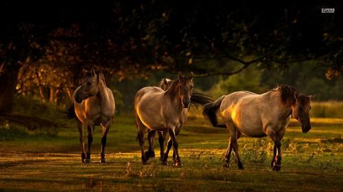 घोड़े वॉलपेपर possibly containing caribou, a wapiti, and elk titled घोड़े