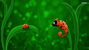 Ladybird and Chameleon