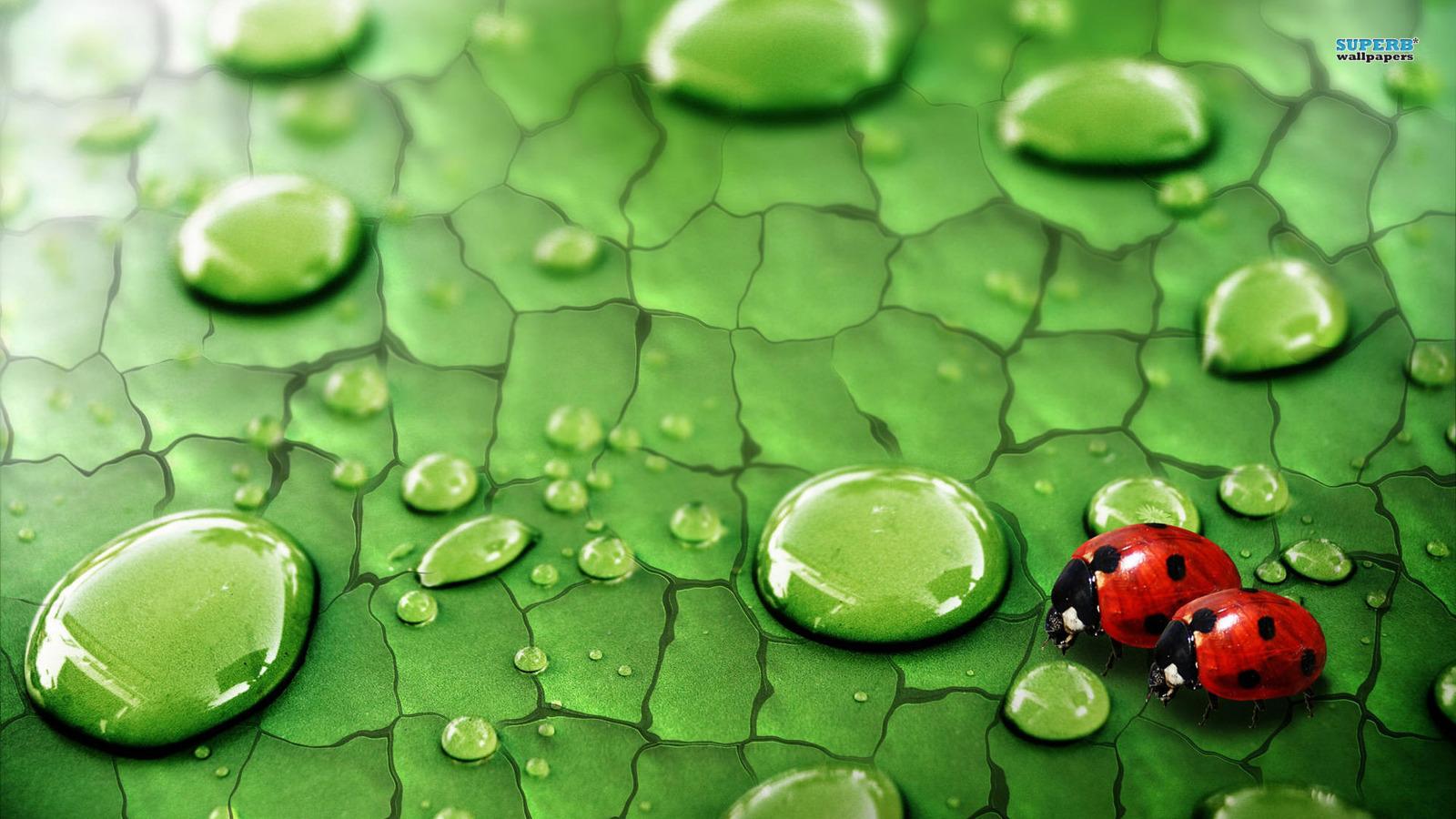 动物 图片 ladybirds hd 壁纸 and background 照片图片