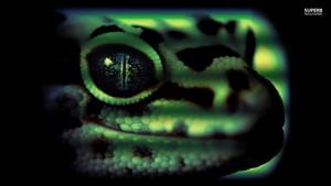 Leopard tokek