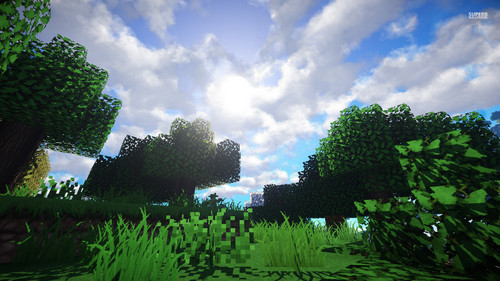 Minecraft پیپر وال containing a live oak entitled Minecraft