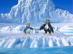 Piplup,Prinplup and Empoleon in Antarctica