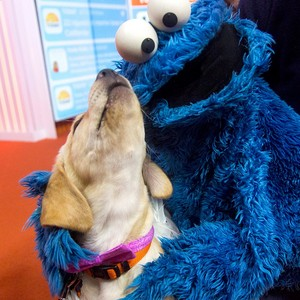 Puppy and Cookie Monster