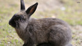 Rabbit - bunny-rabbits wallpaper