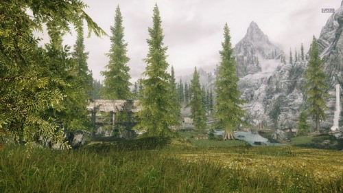 Elder Scrolls V Skyrim Wallpaper With A Ponderosa Douglas Fir And