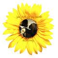 Sunflower Love - sawyer-and-juliet fan art