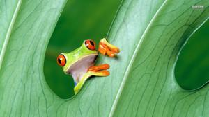 pokok Frog