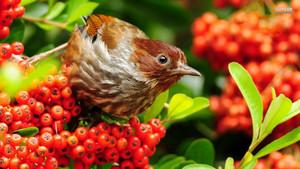 warbler, burung cekup daun
