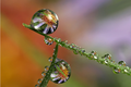 Water Droplet Reflections
