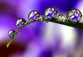 Water Droplet Reflections - illusions photo