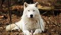Wolf         - alpha-and-omega-2-a-howl-iday-adventure photo