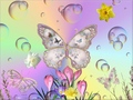 free butterflies - butterflies photo