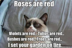grumpy cat rosas are red
