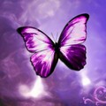 pretty pruple - butterflies photo