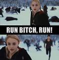 run,b*tch,run!!! - twilight-series photo