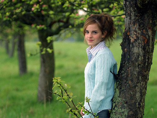 Emma Watson wallpaper with an american white birch, a sitka spruce, and a mahogany titled young Emma