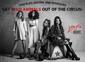 """Get Wild Tiere Out of the Circus"""