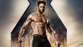 Wolverine - x-men wallpaper