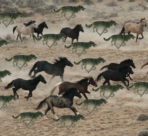A pack of lobos hunting down an herd of cavalos