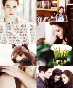 BD 2 collage