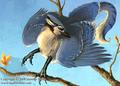 Blue jay Gryphon