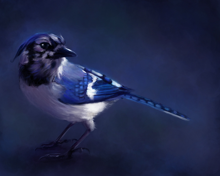 Blue Jays Images Jay Wallpaper And Background Photos