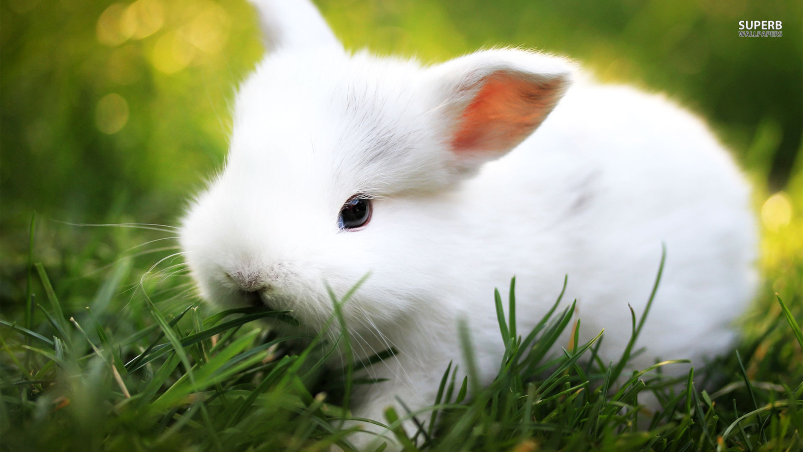 壁纸 动物 兔子 1600_900