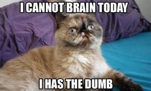 mèo rule!!!!