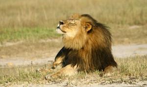 Cecil...R.I.P