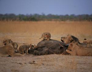 Cecil family
