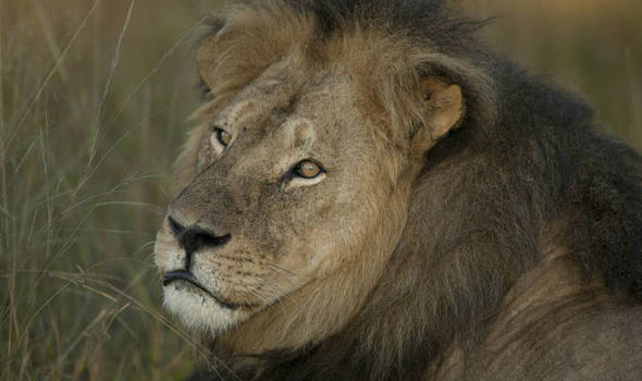 Cecil the lion...R.I.P.