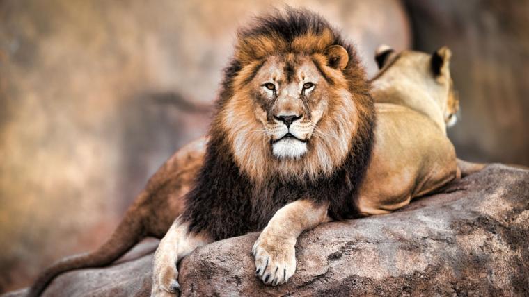 Cecil,the lion...R.I.P