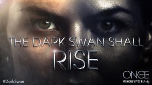 Dark cisne