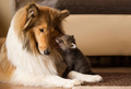 Dog and Baby Fox            - dogs photo