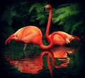 Flamingoes - pink-color photo