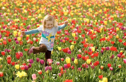 Beautiful Pictures wallpaper containing a flowerbed called Flowers