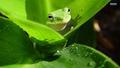 Frog - frogs wallpaper