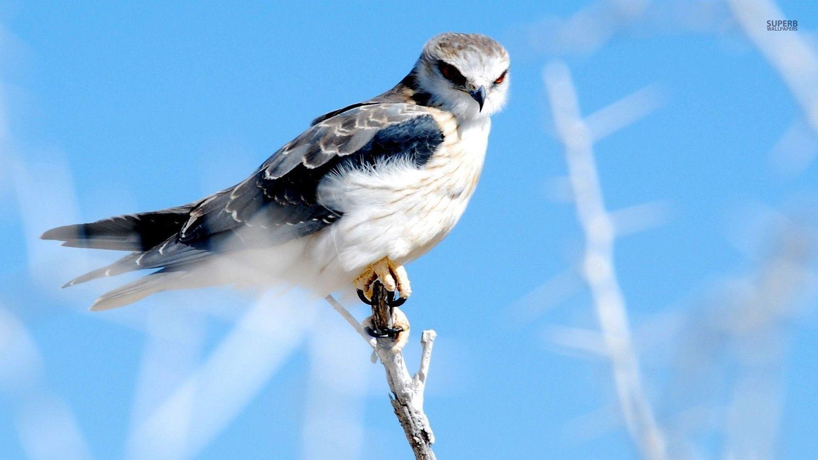 壁纸 动物 鸟 鸟类 雀 桌面 1600_900