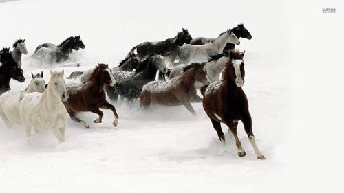 घोड़े वॉलपेपर possibly with a herder and a गाय का बच्चा, बछड़ा titled घोड़े